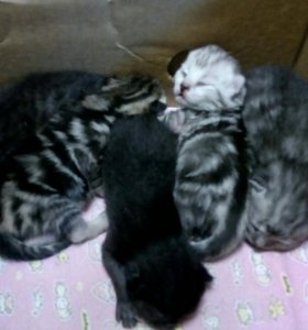 Бронируем котят