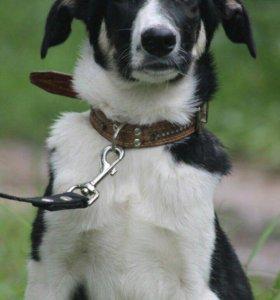 Самая добрая собака в мире хочет домой