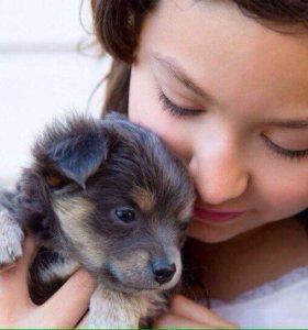 Собаки и щенки