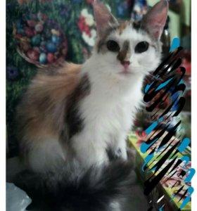 Кошка, 1 год