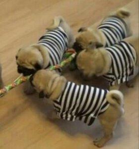 Тельняшка для собаки