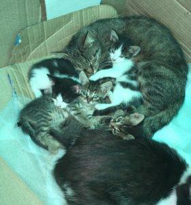 4 месячных котят ищут дом.2 мальчика и 2 девочки.
