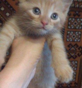 котятушки-ребятушки в добрые руки