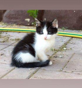 Котенок ищет себе дом 🏡