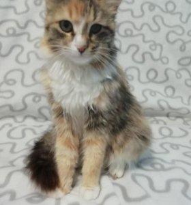 Стерелизованная кошка