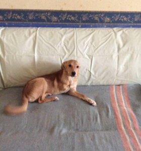 Собака Барон