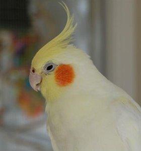 Улетел попугай, помогите найти