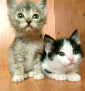 Котята девочки