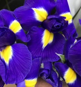 Цветы от 45 руб