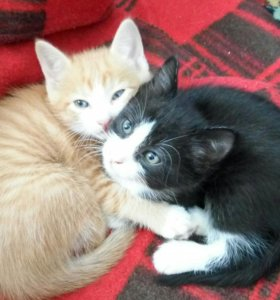 Два братишки ищут новый домишко))