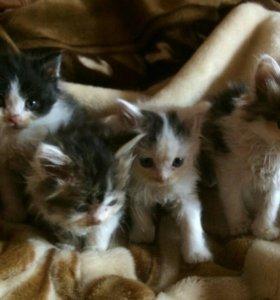 Отдам котиков в добрые руки