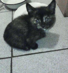 Кошечка, 3 месяца