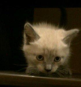 Красивые котята ищут хозяев