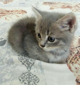 Отдам в добрые руки котят!