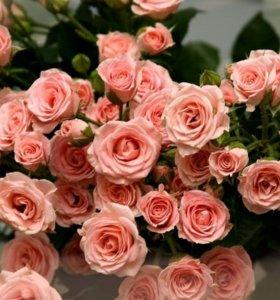 цветы оптом и в розницу