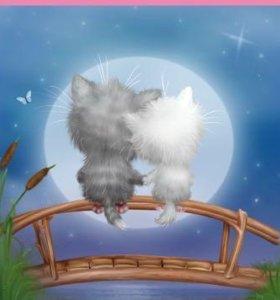Вязка. кошке  кот требуется