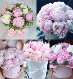 Цветы пионы 25 пионов коробке