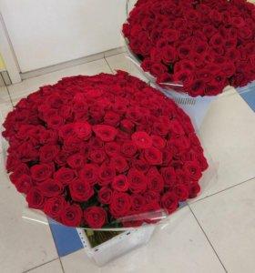 201 красная роза спб 101 роза