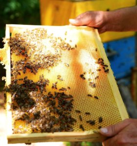 Натуральный мед оптом и в розницу