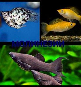 Рыбки в наличии и под заказ
