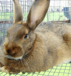 Продаю кроликов, разного возраста и пород