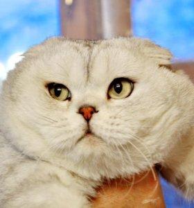 Возможна вязка за котёнка