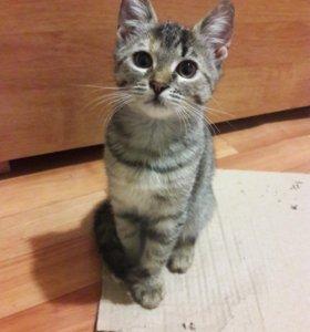 Отдам милых котят в добрые руки