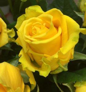 Розы для оптовиков