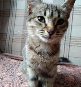 Котенок (девочка, частично вегатарианка)