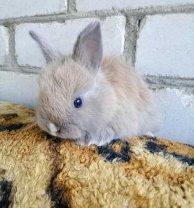 декоративные ангоровые крольчата