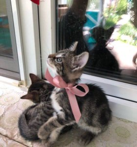 Добрые, ласковые, игривые котята