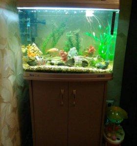 Аквариум jebo на 100 литров с рыбками