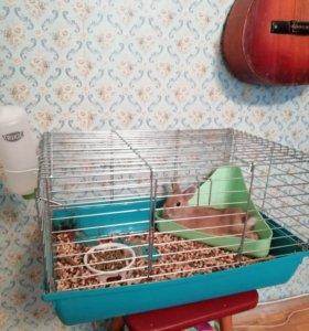 Продаю кролика с клеткой