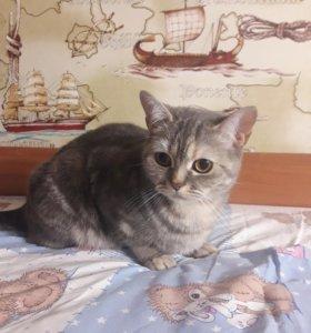 Кошка, 2 года. Зовут Муся.
