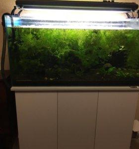 Готовый аквариум 100х45х50(h)