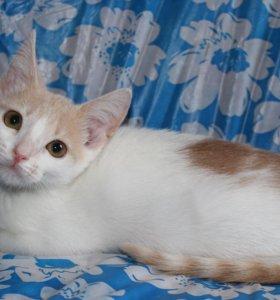 Котёнок в добрые руки Жиган, кот в дар