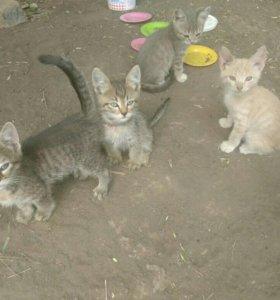 В добрые руки, котята ищут дом