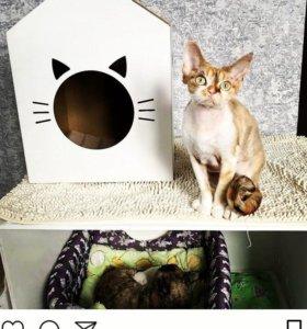 Супер Домики для Котов и Кошек