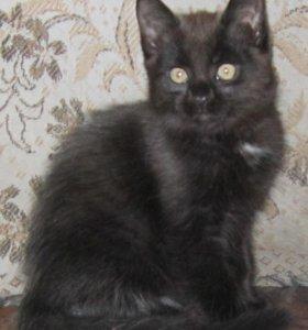 Котик 2 месяца