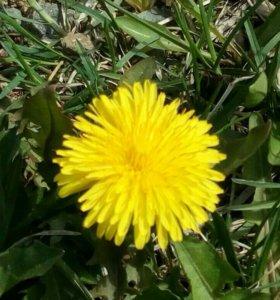 Покос травы и грузоперевозки