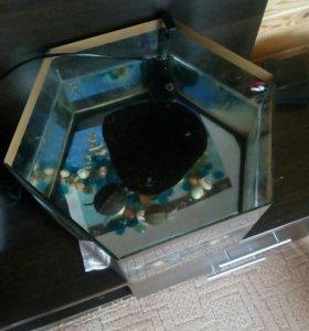 Черепашки красноухие с аквариумом и фильтром.