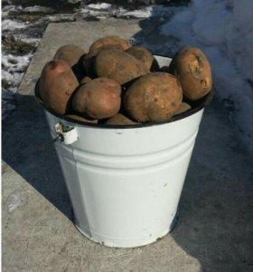 Картофель домашний.