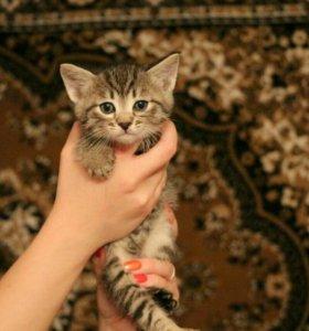 Отдам котят только в хорошие руки