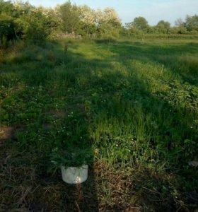 Покос травы триммером не дорого