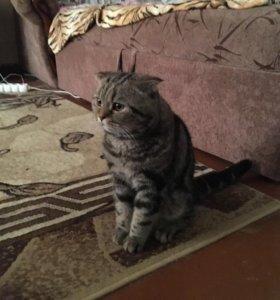 Котик ждёт кошечку в гости!