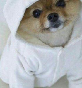 Выгул собак в фурманове