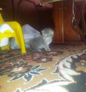 Кошечка вислоухая рождена 25 апреля)