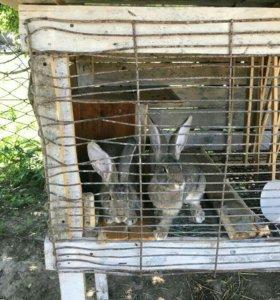 Кролики 7 штук