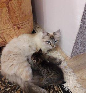 Кошечка с котенком