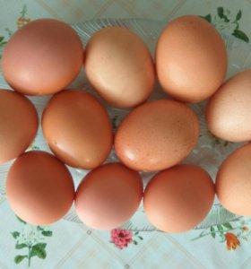Яйцо домашнее !